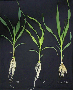 3-roots-1-2